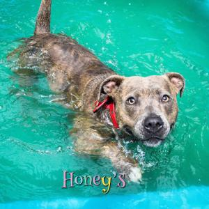 staffie doggy swimming pool